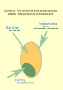 Infografik Getreidekorn